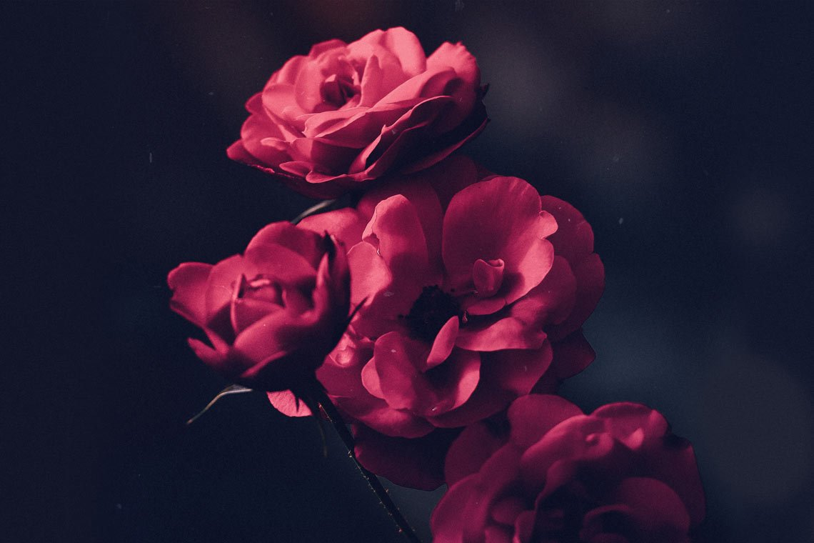 flowers by Ameen Fahmy @ameenfahmy_ via Unsplash