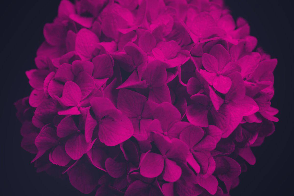 Elegant Flower: Free Photoshop Brushes - The Designest
