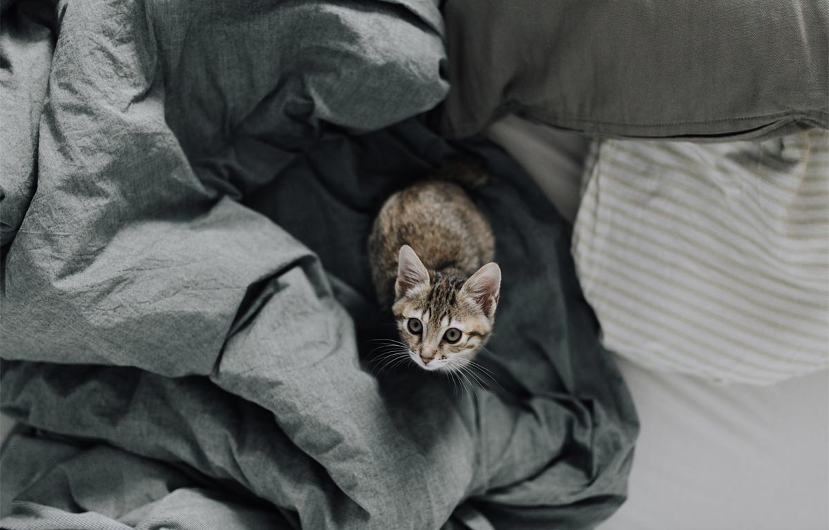 Cat in bed wallpaper by Lucija Ros
