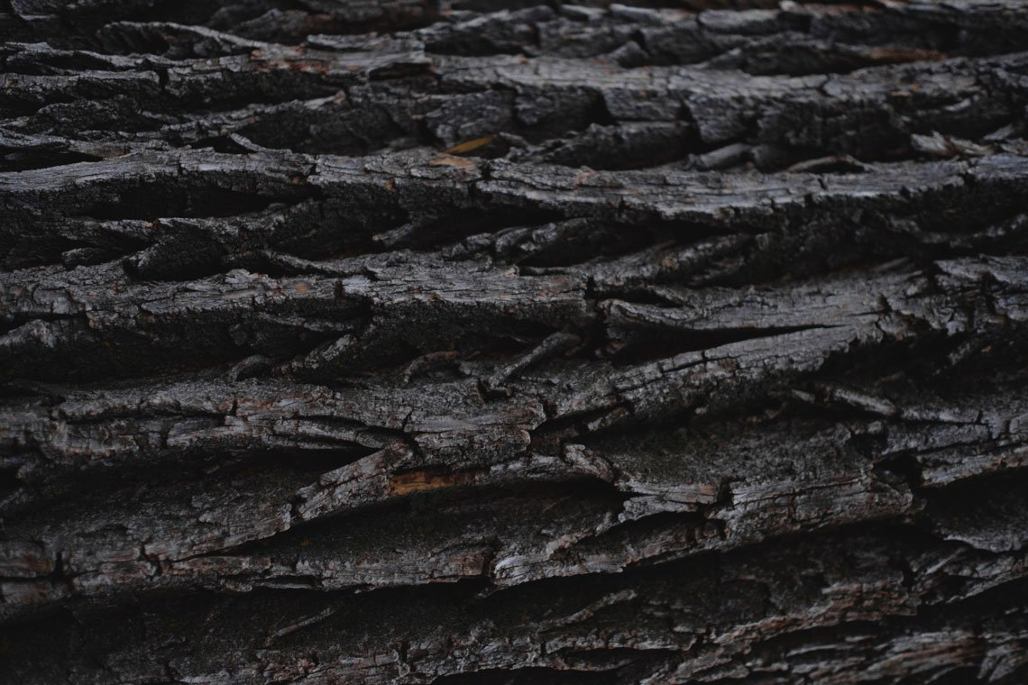 Close-Up Dark Tree Background