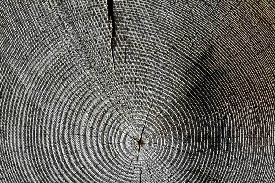 Dark Tree Rings Texture