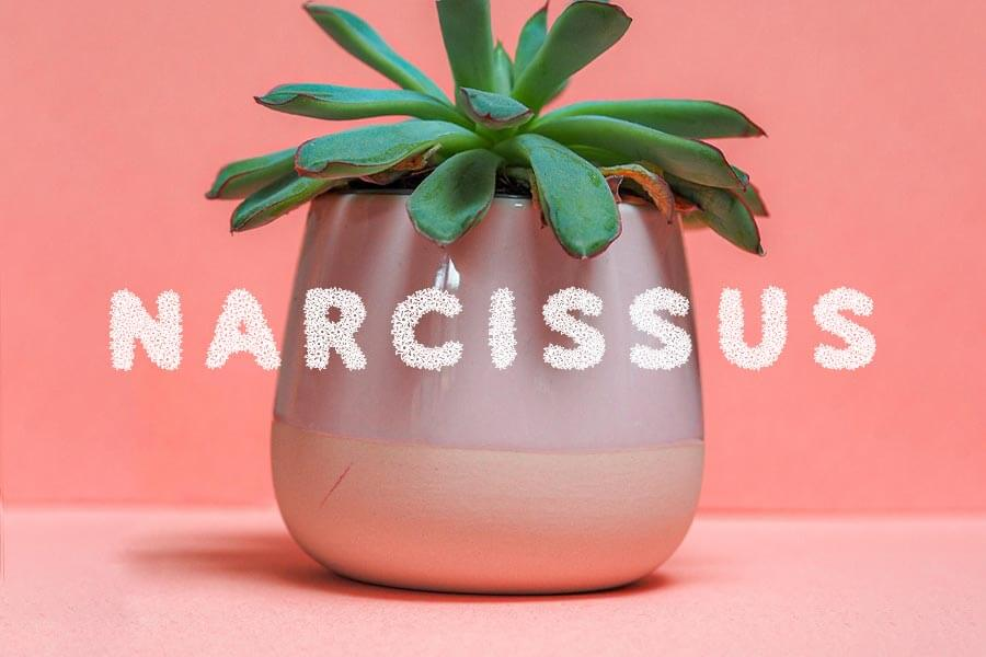 Narcissus Free Flower Font