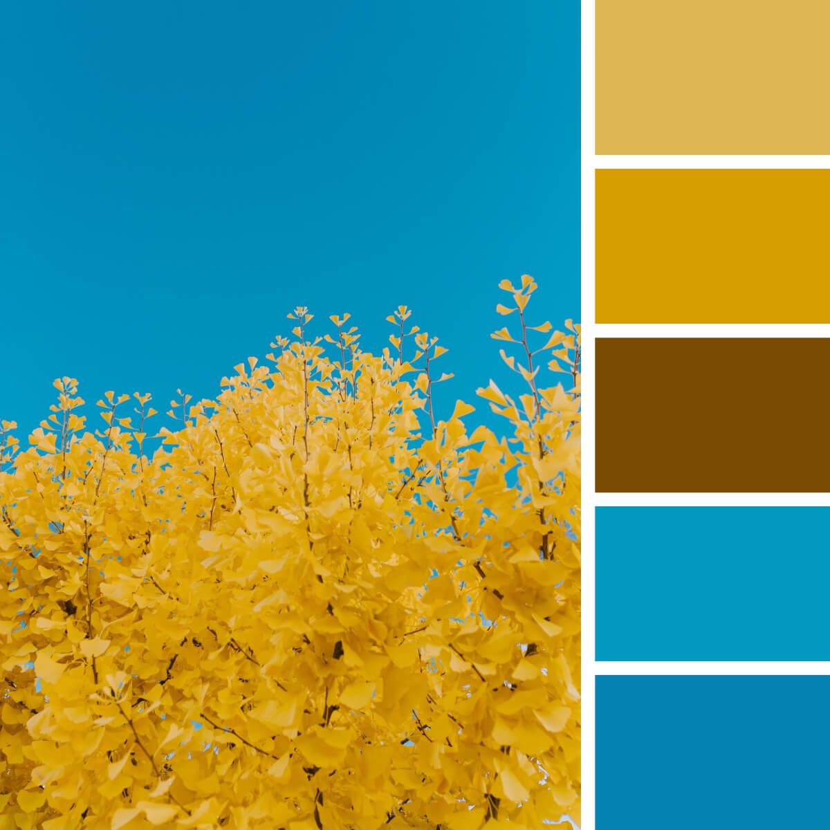 Autumn Gold & Blues