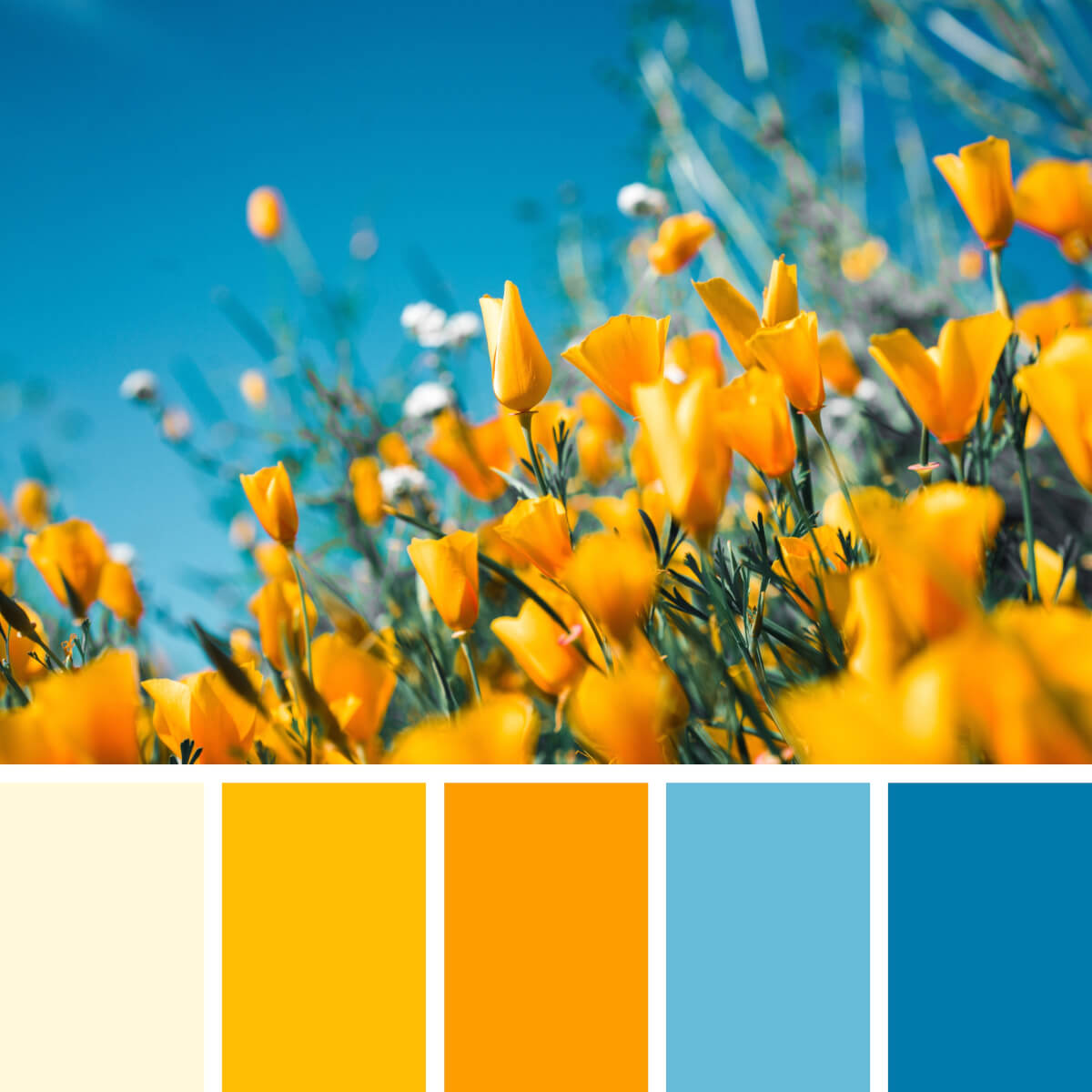 Blooming Yellow & Blues