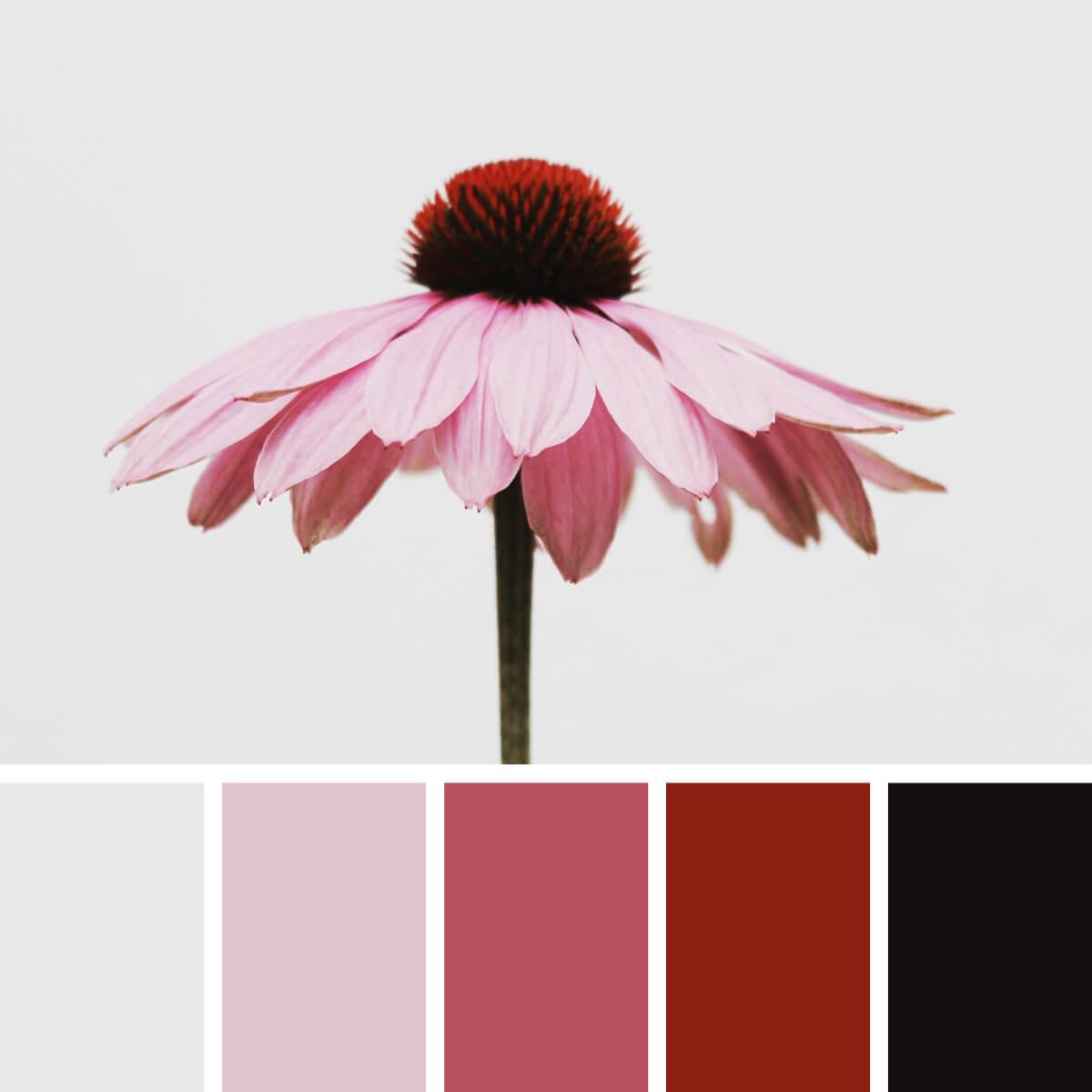 Floral Pink & Tender