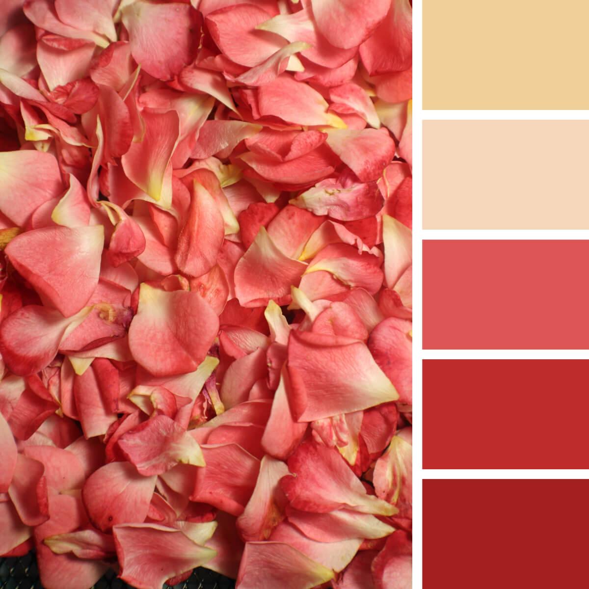 Geranium Red & Yellow