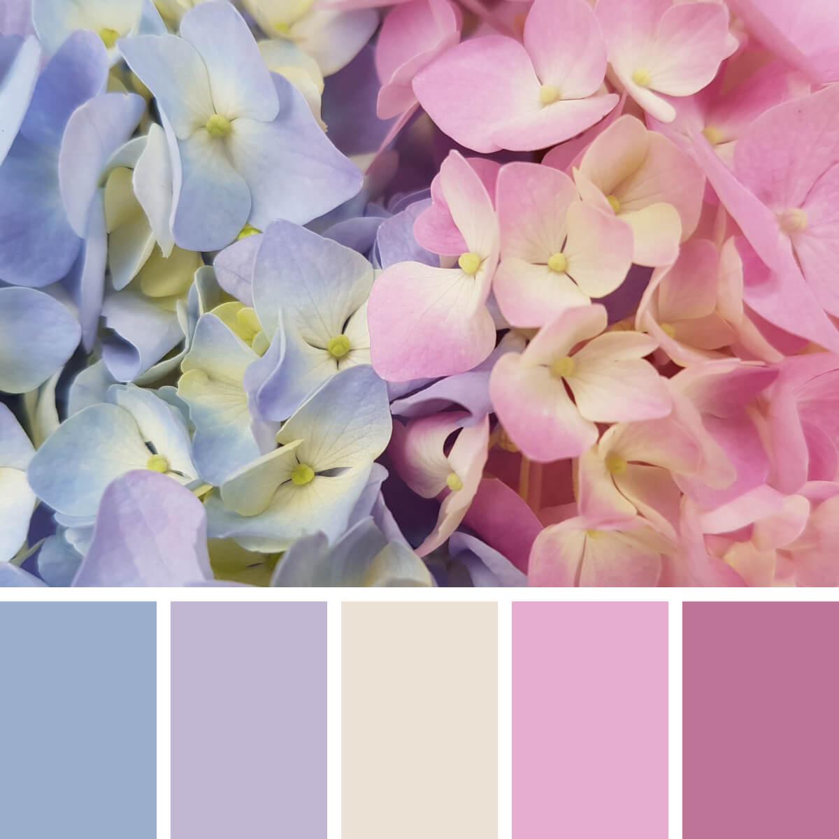 Hortensia Pinks & Browns