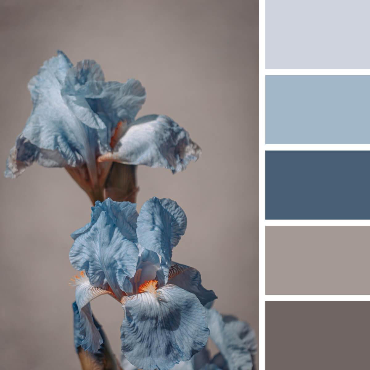 Iris Blue & Brown