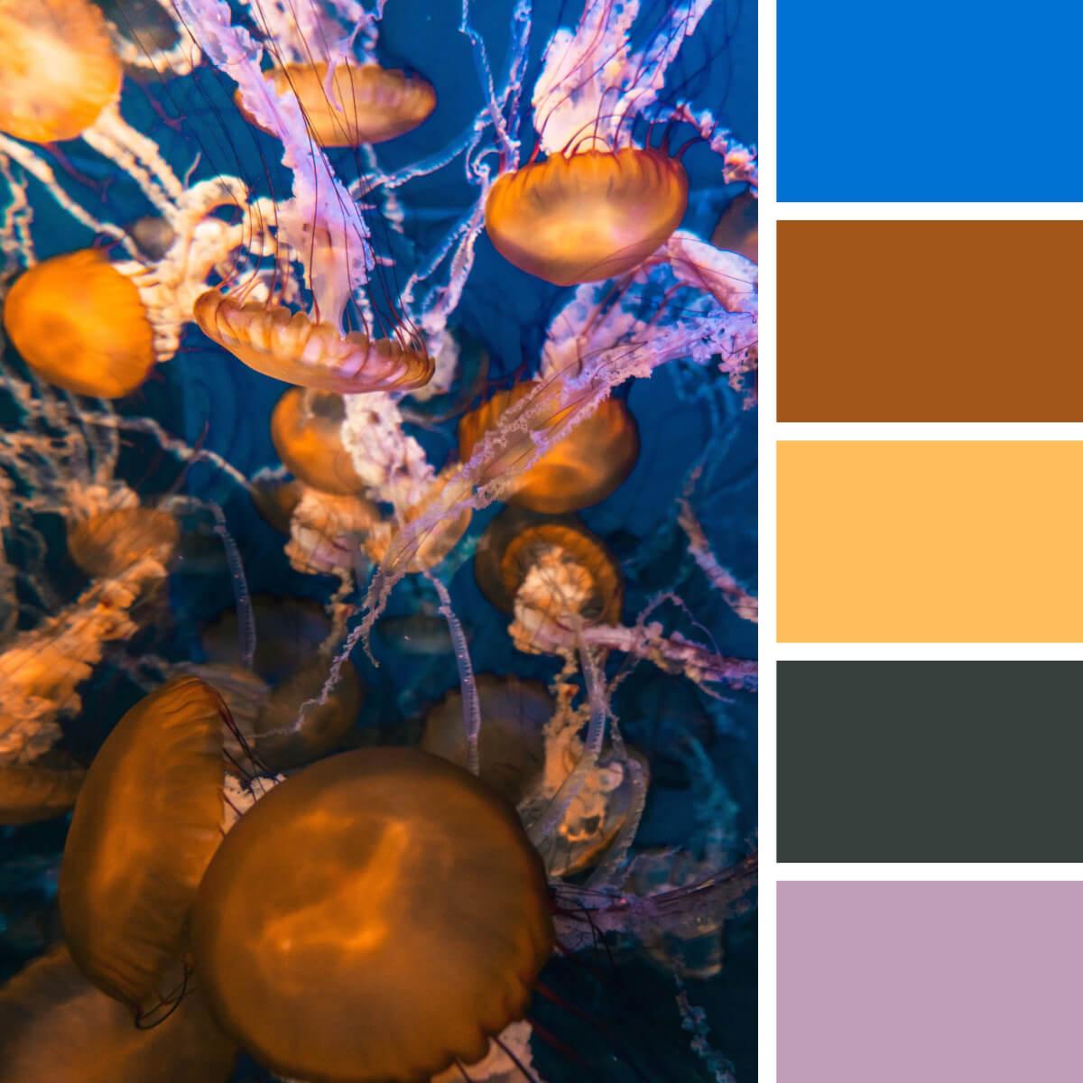 Jellyfish Yellow & Royal Blue