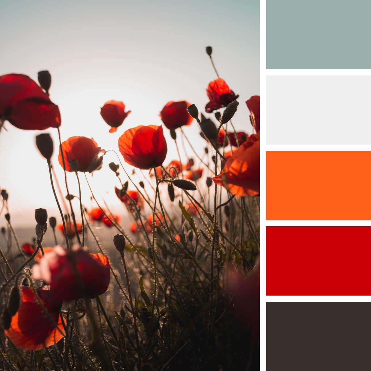 Poppy Red & Orange