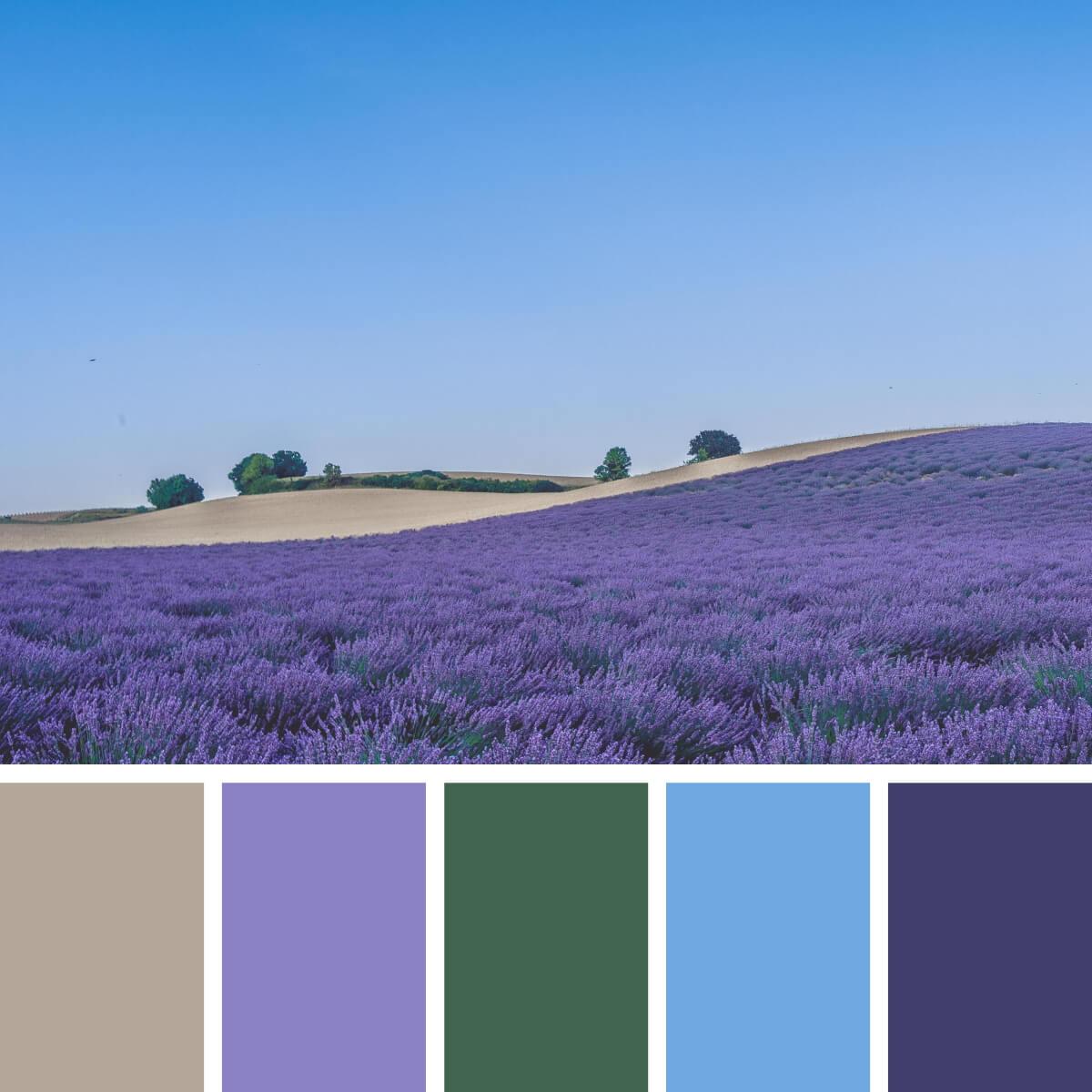 Provence Lavender & Blue