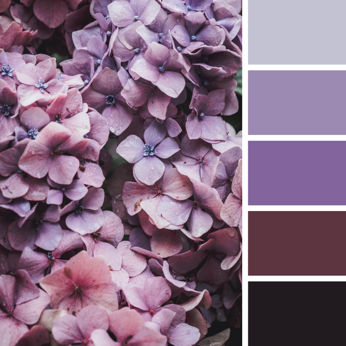 Sophisticated Pink & Purple